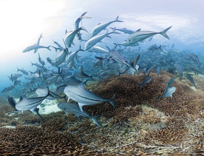 Wipeout by warming spells trouble for the world's oceans