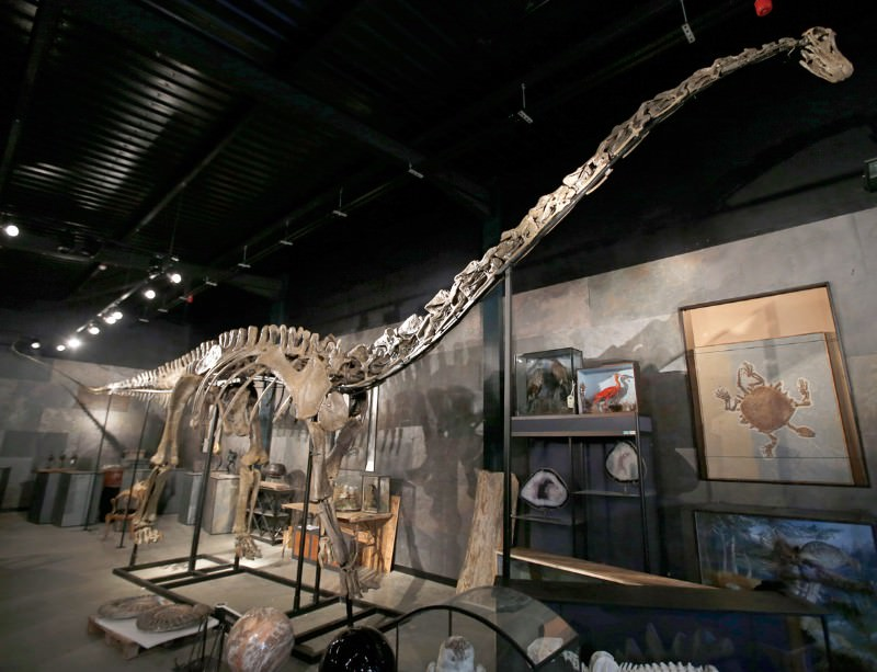 Got a spare half a million? A Diplodocus could be yours