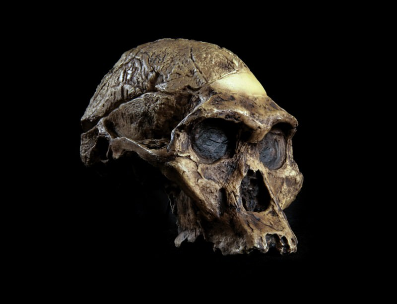 2014 preview: First million-year-old genome