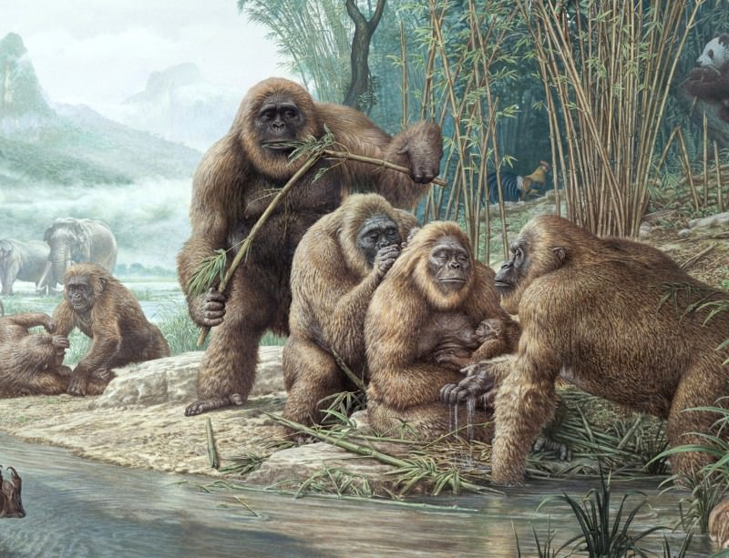 The extinction of Gigantopithecus has been blamed on switching to a fruit-filled diet