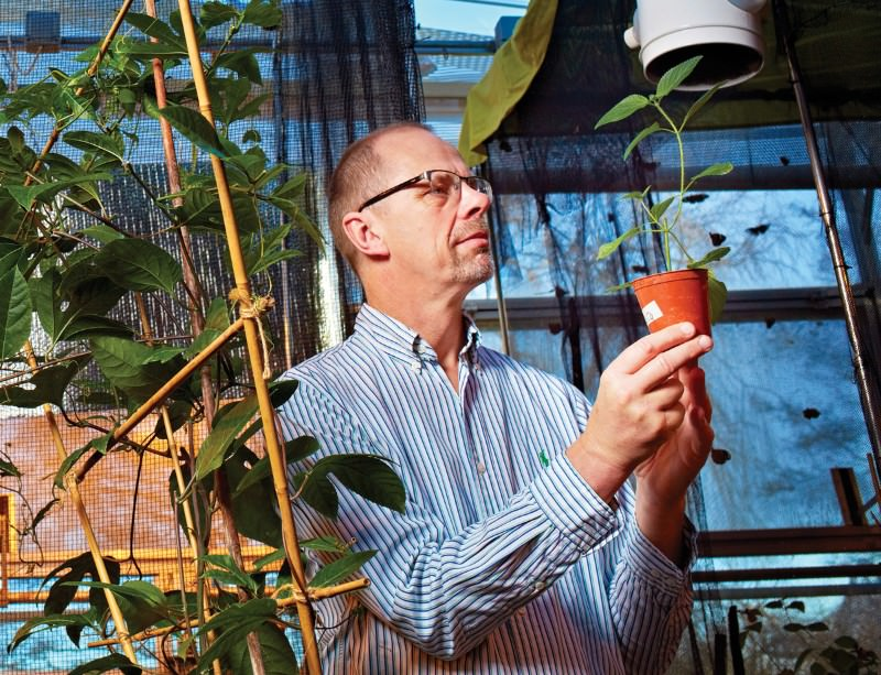 Our reactions to non-native plants are often emotional, not rational