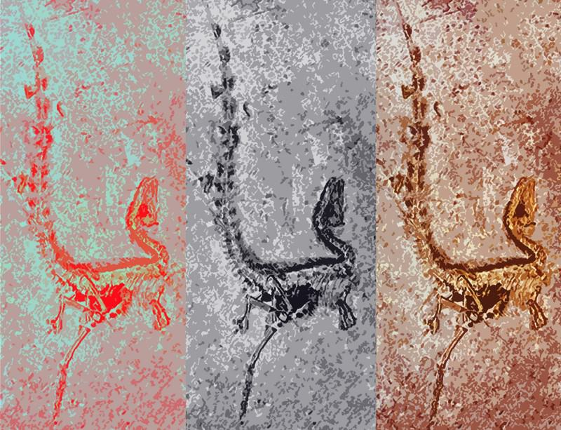 We could be able to work out the colours of extinct animals from the shapes of their pigment factories