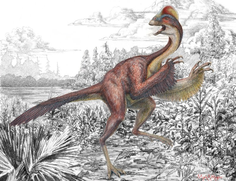 Giant carnivorous chicken dinosaur is first of its kind