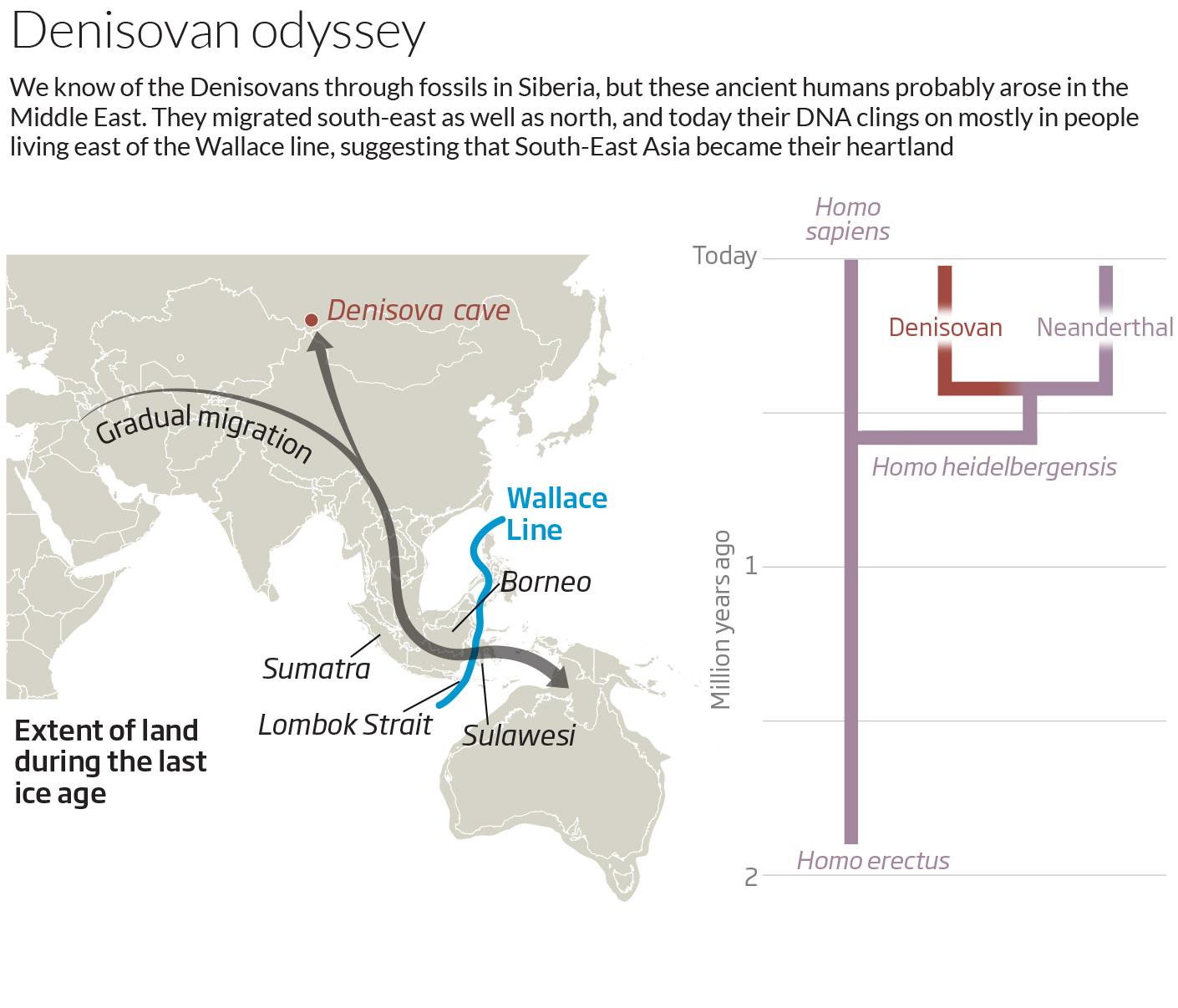 Denisovan Odyssey