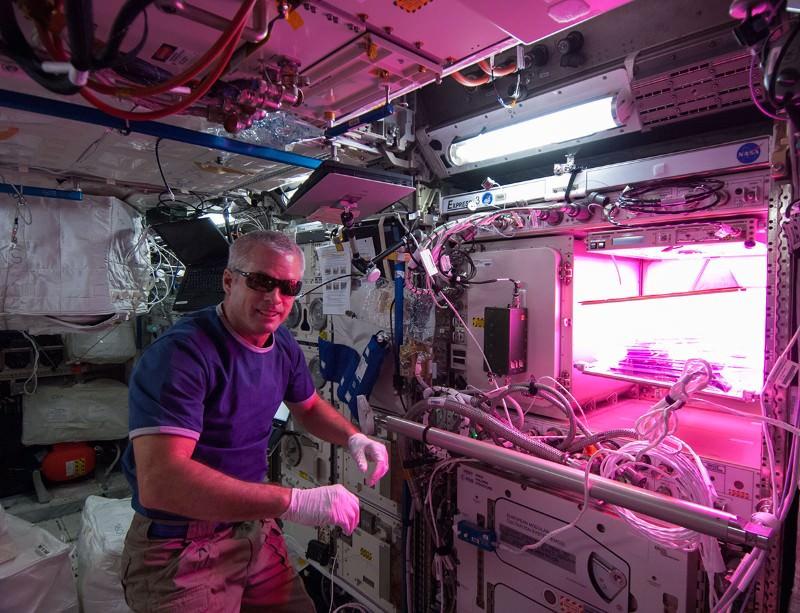 Astronaut sows first fresh veg in NASA space 'garden'