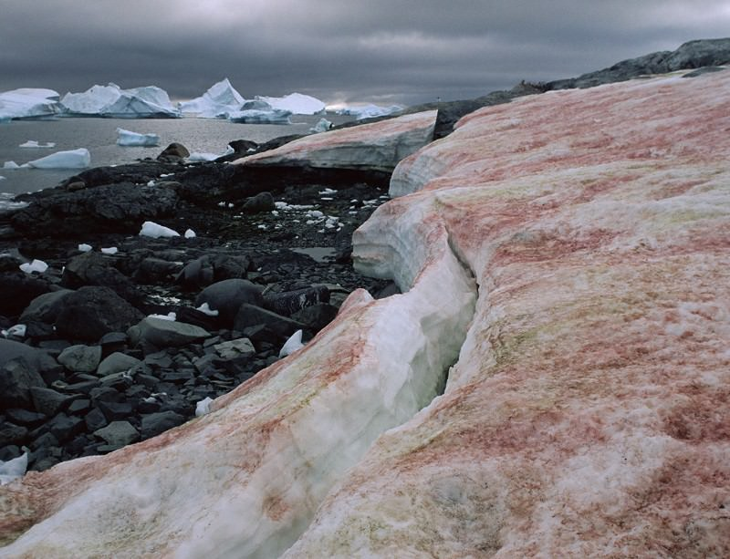 Antarctic algae are pretty chilled out