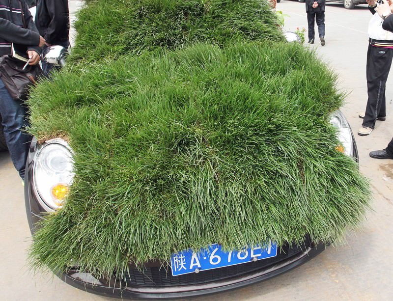 Biofuels could power greener cars. Grass-based paint-job strictly optional