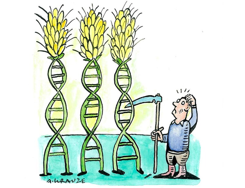 Genetic moderation is needed to debate our food future
