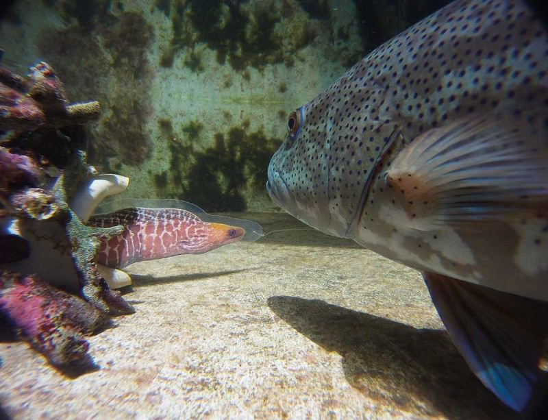 Zoologger: Fish that picks its work partners wisely