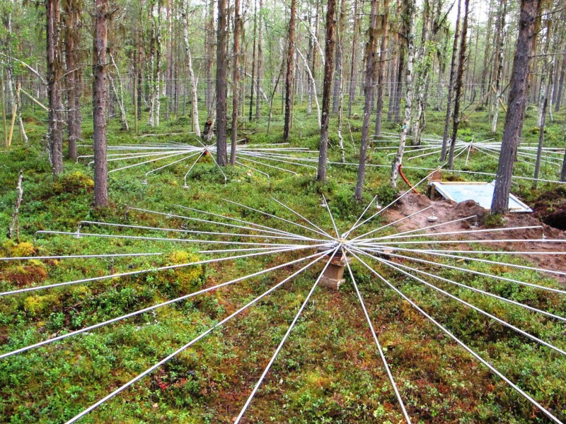 Spidery forest gadgets catch secret nuclear blasts