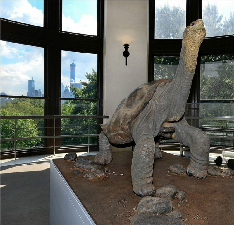 Meet Lonesome George, the face of extinction