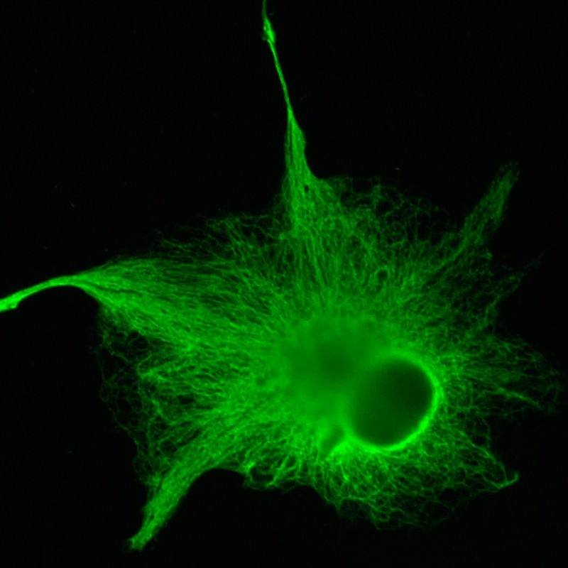 Astrocyte nerve cells make a wealth of connections