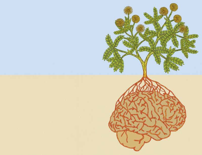 Root intelligence: Plants can think, feel and learn