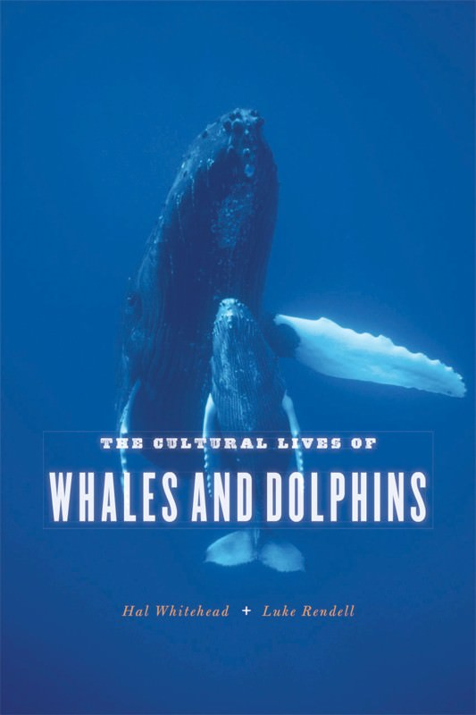 Whaleworld: Looking for cetacean culture