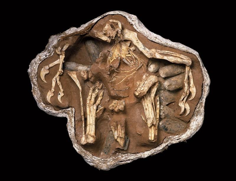 Stunning fossils: Big Mama brooding
