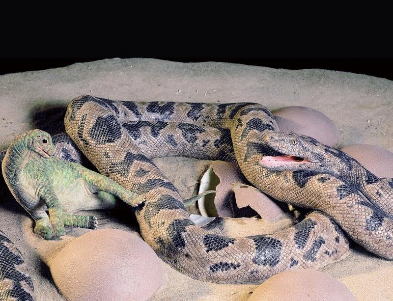 Stunning fossils: Snake eating baby dinosaur