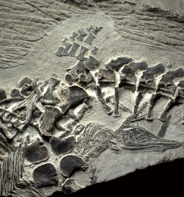 Stunning fossils: Mother giving birth