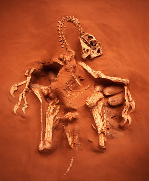 Stunning fossils: The seven most amazing ever found