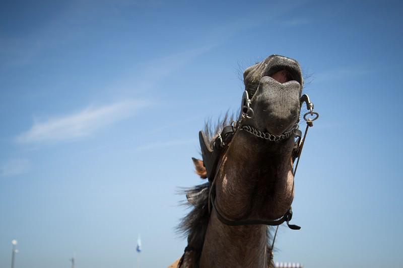 Do female horses prefer high voices? Neigh!