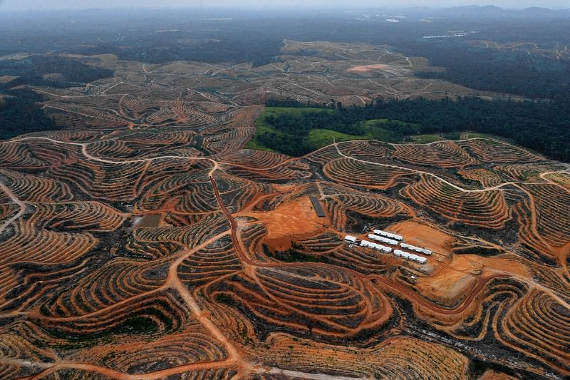 Land cleared for palm oil