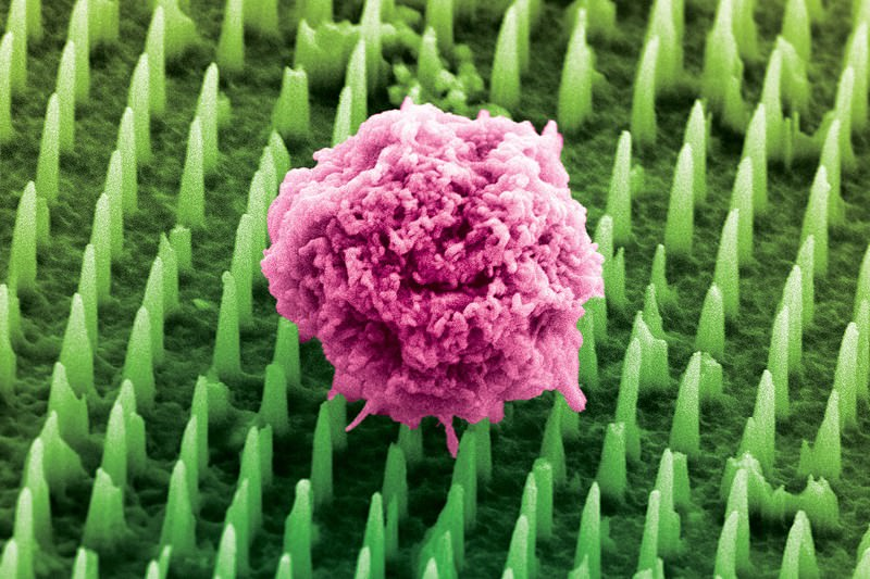 Nanoscale bed of nails to make organs behave better