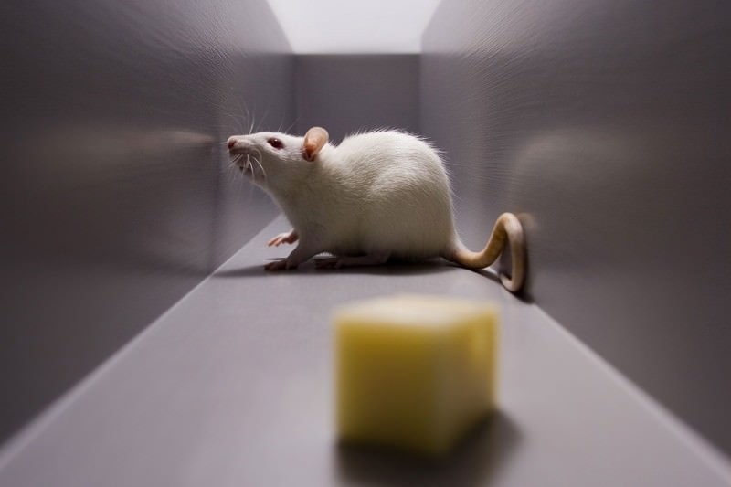 It might be cheesy, but this mouse has a 6th sense
