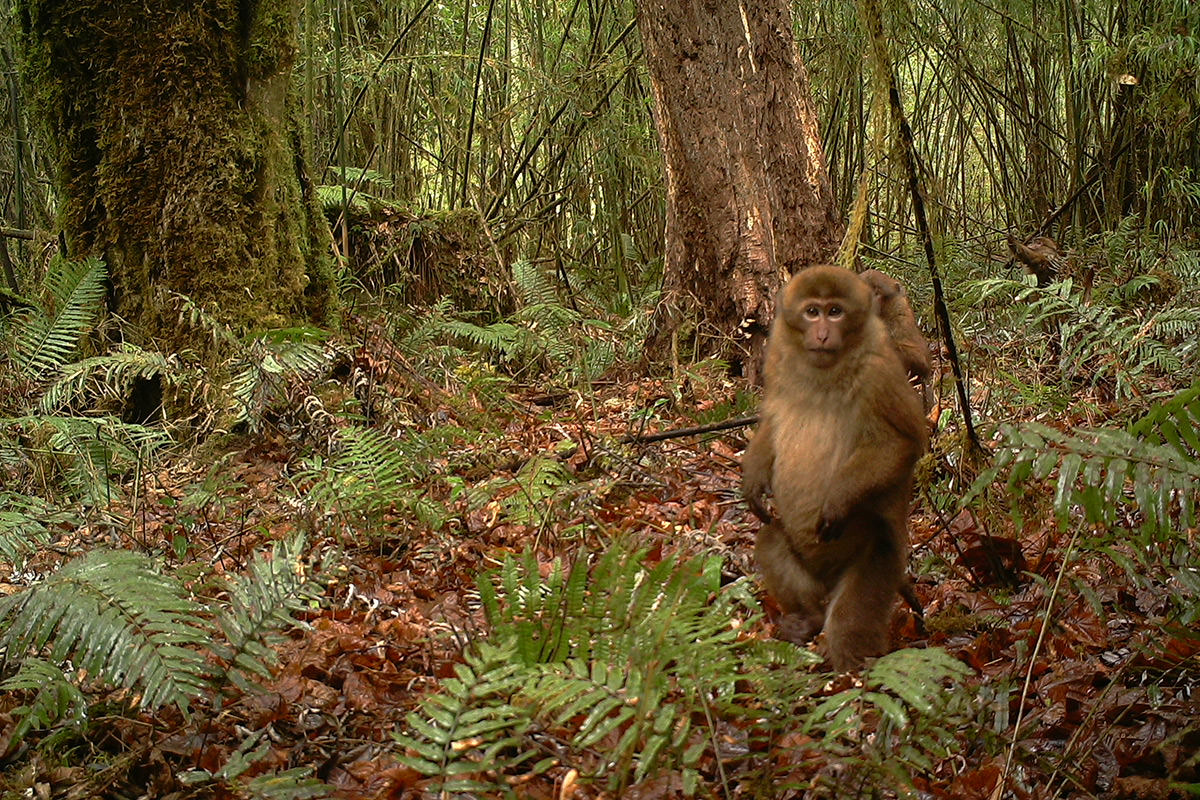A monkey in a forest