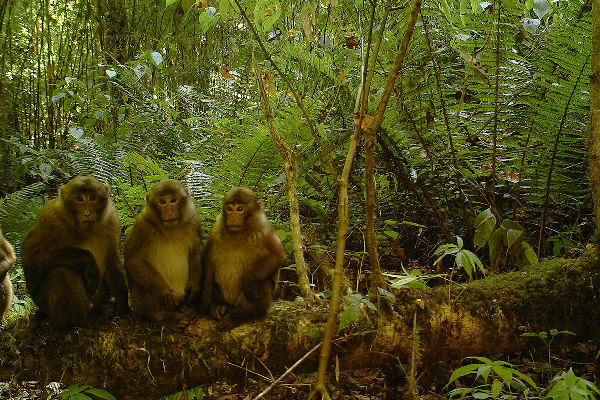 Three young monkeys in a forest