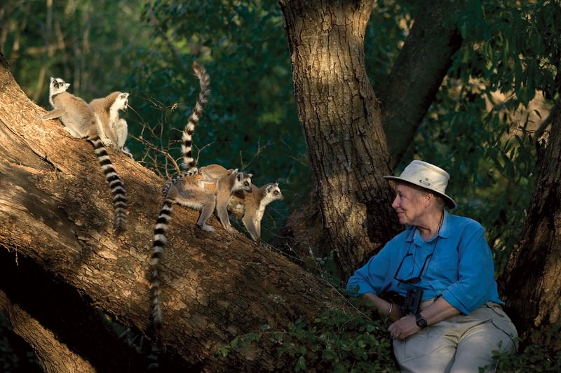 Thank You, Madagascar: Diary of a life among lemurs