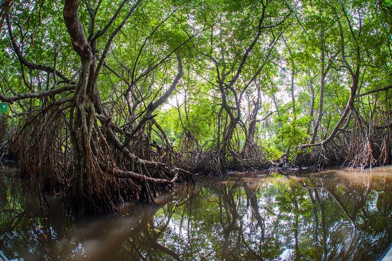 Mangroves promised full protection in Sri Lanka