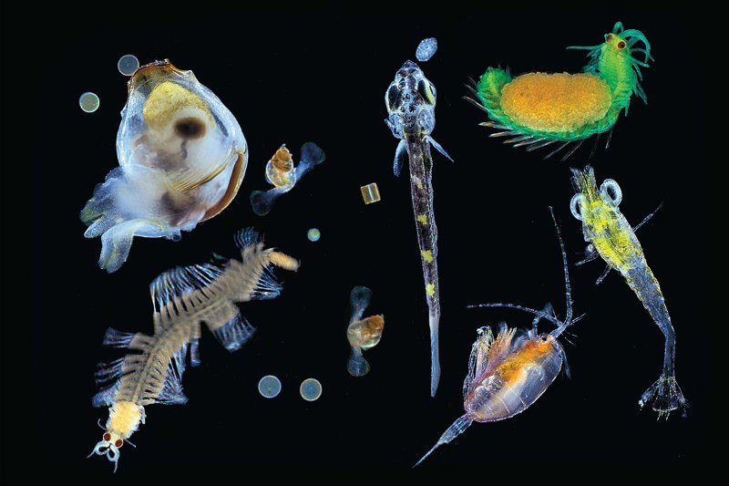 Ocean's microbiome has incredible diversity – and human likeness