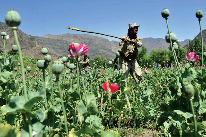 Back to the flower bed you go (Image: Noorullah Shirzada/AFP/Getty