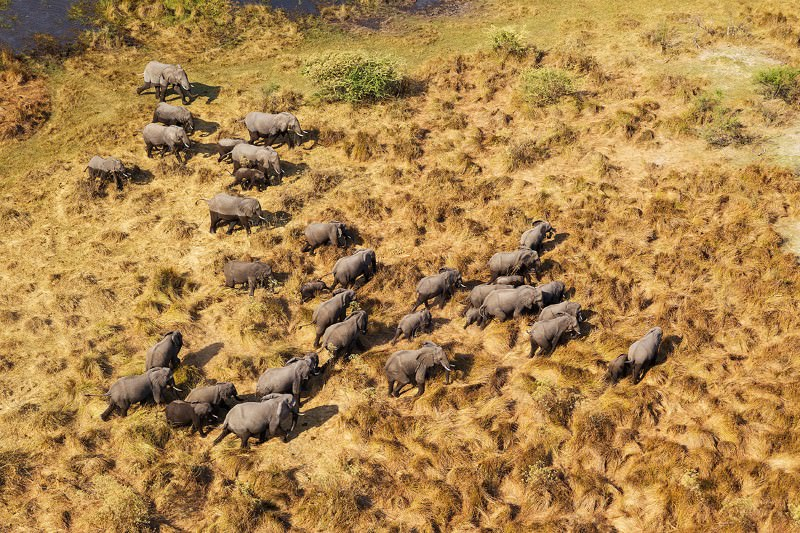The Great Elephant Census is the most exhaustive aerial survey ever conducted of savannah elephants