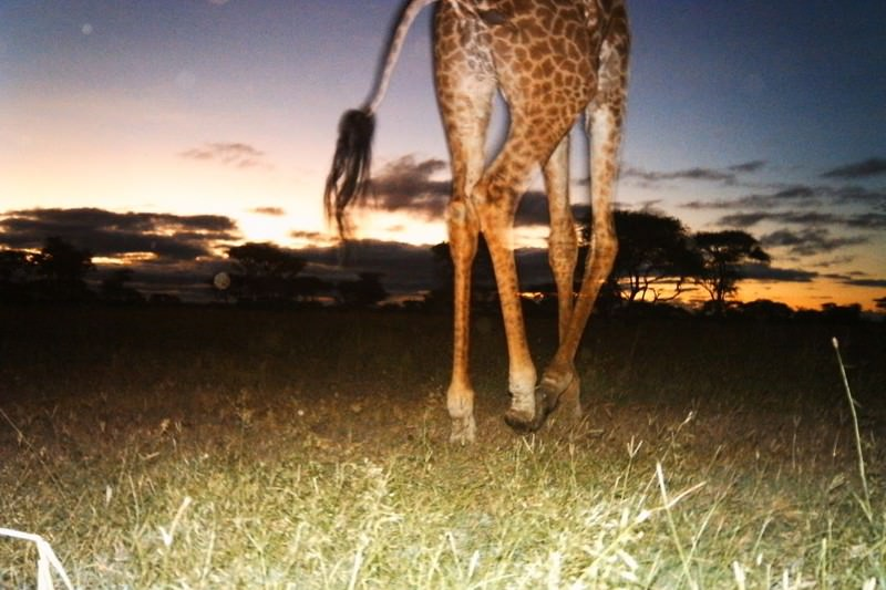 Serengeti snaps capture secret lives of animals