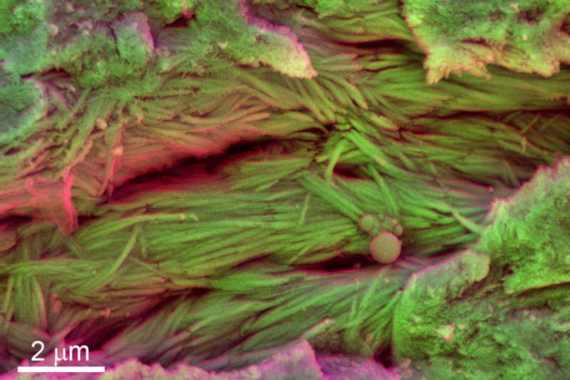 Dinosaur blood cells extracted from 75-million-year-old fossil