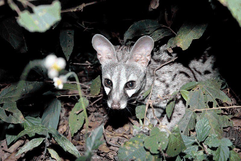Voracious carnivores caught knocking back sugary flower nectar