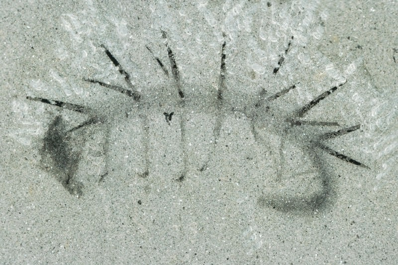 Weird fossil worm with legs and spikes finally reveals its head