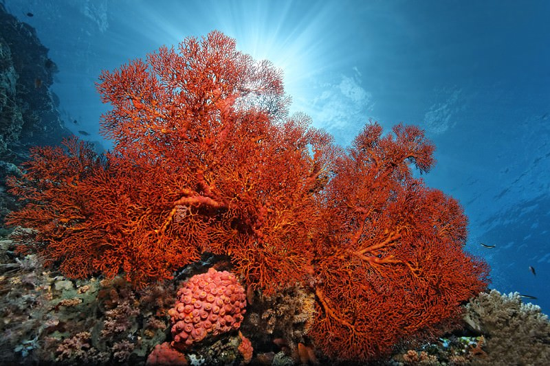Heat-tolerant genes could help corals adapt to climate change