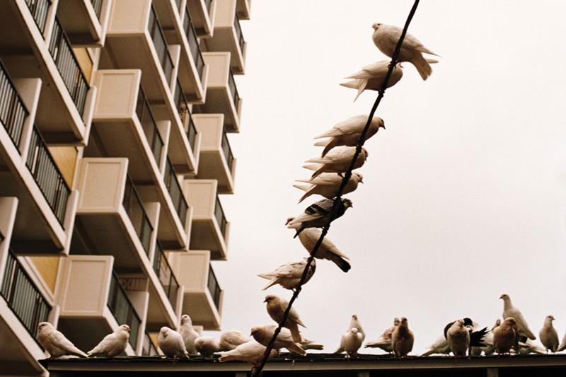 Urban sprawl: spot the birdie