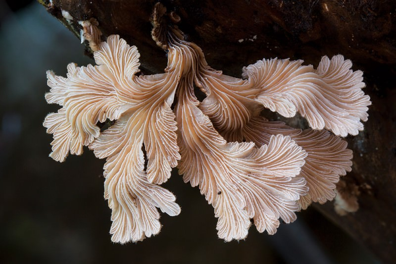 If you go down to the rainforest today: The fungal realm