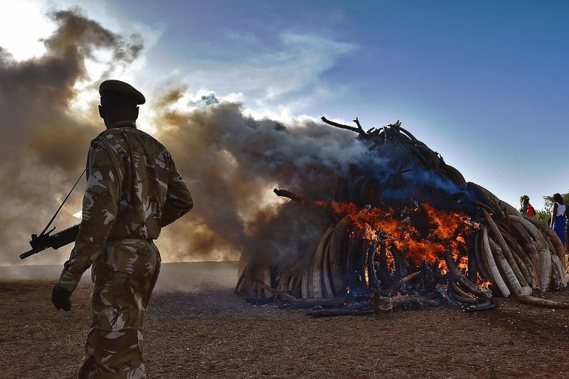 Crushing ivory stockpiles destroys vital evidence of poaching