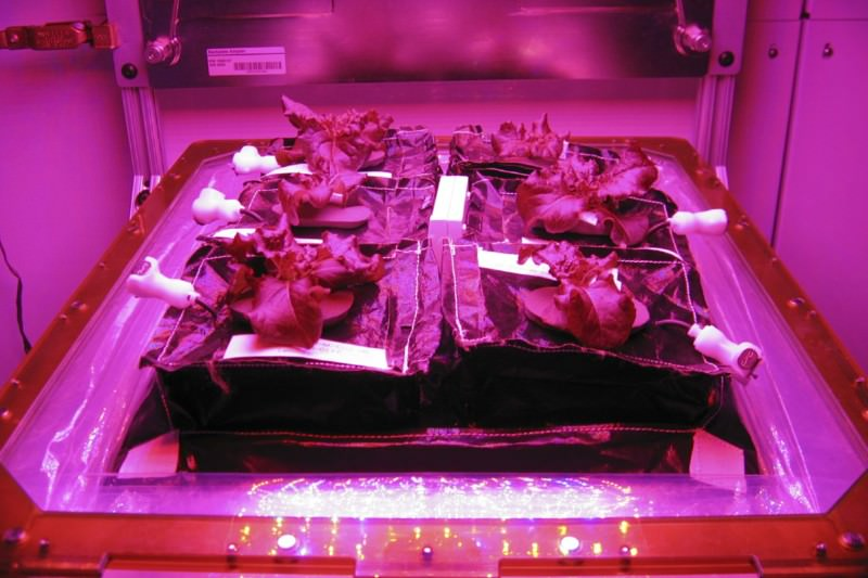 Astronauts prepare to take first bite of salad grown in space