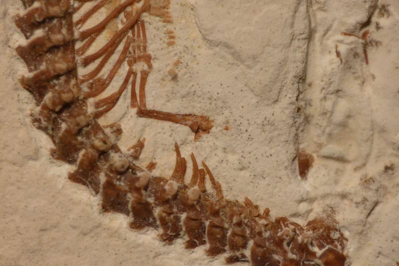 Four-legged fossil holds secret of snake's slithering origins