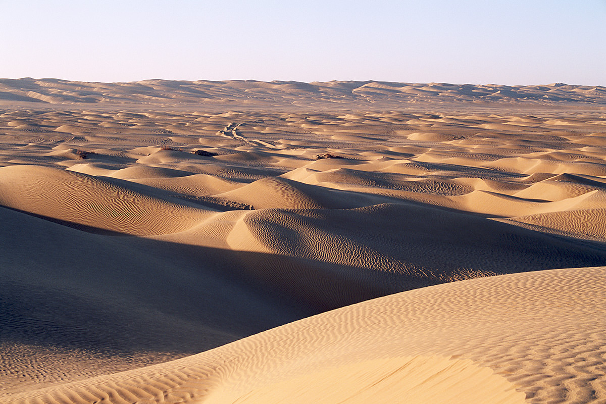 carbon sink desert
