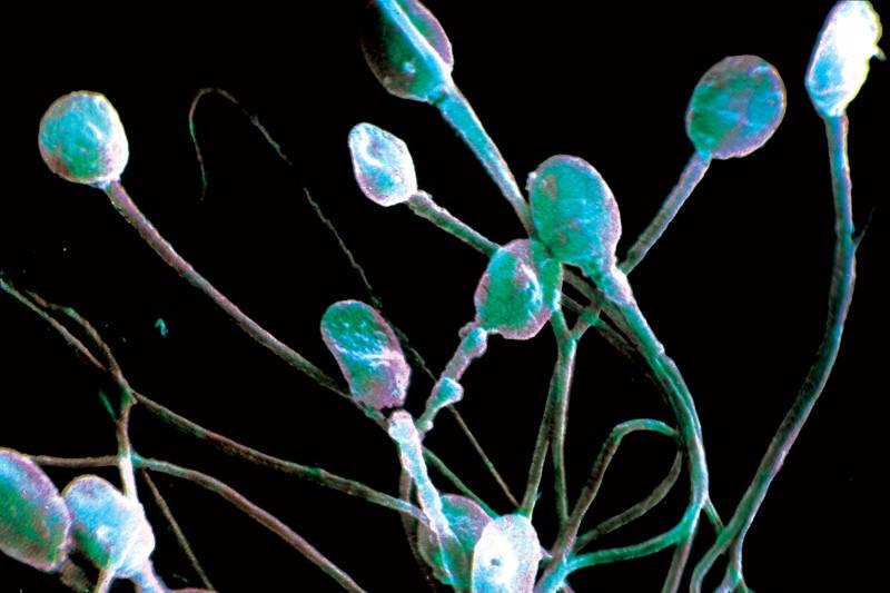 Le sperme a pouvoir      de contrôle sur les gènes et le comportement des femmes