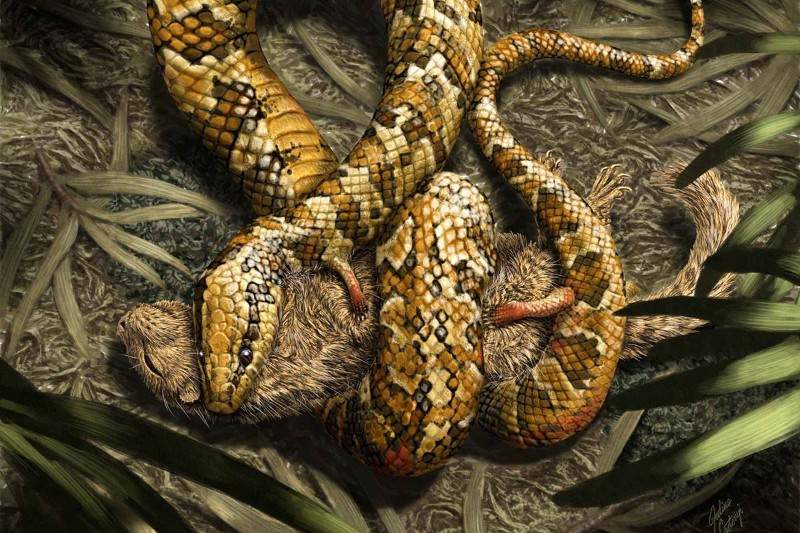 Four-legged fossil holds secret of snake's slithering origins