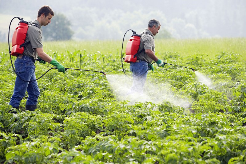 'Big Farmer' firms plan pesticides to manipulate gene expression