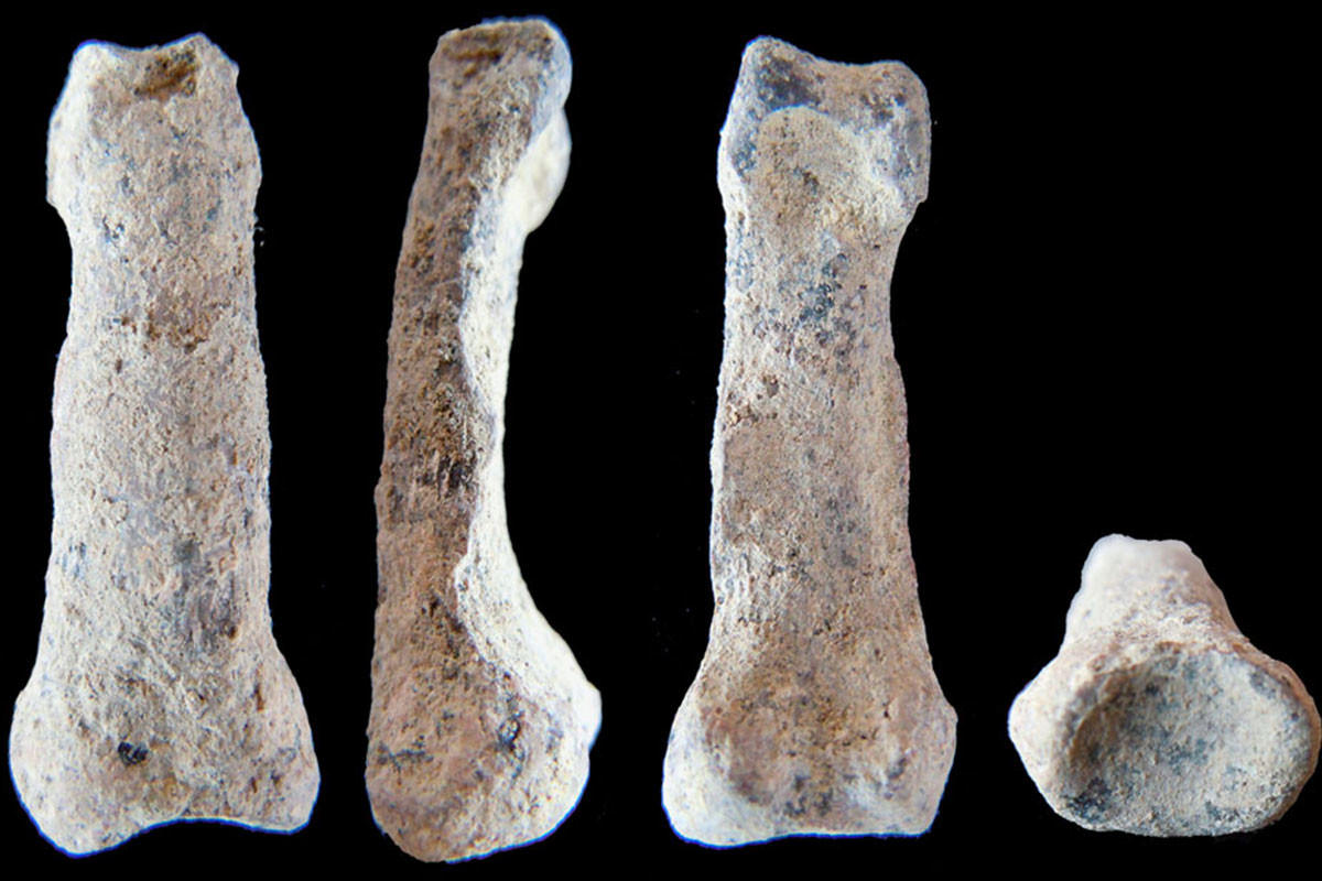 The 1.8 million year old pinky finger bone, pictured at different angles
