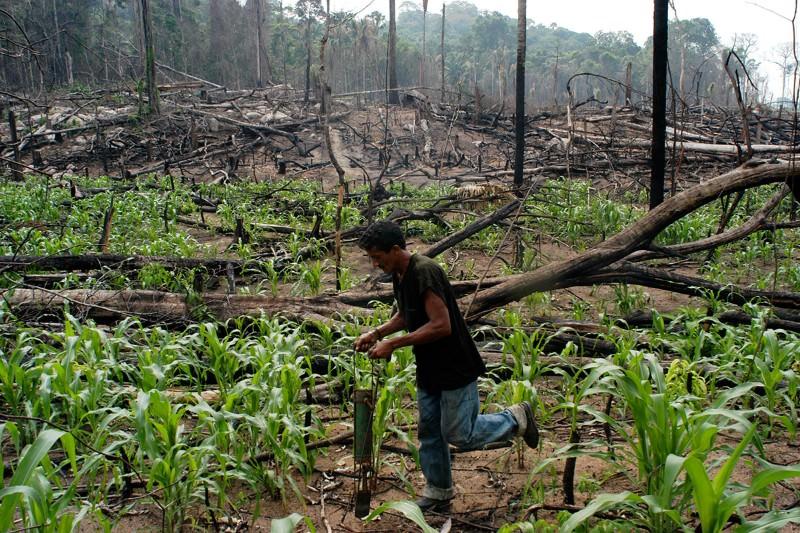 Brazil's resettlement of farmers has driven Amazon deforestation