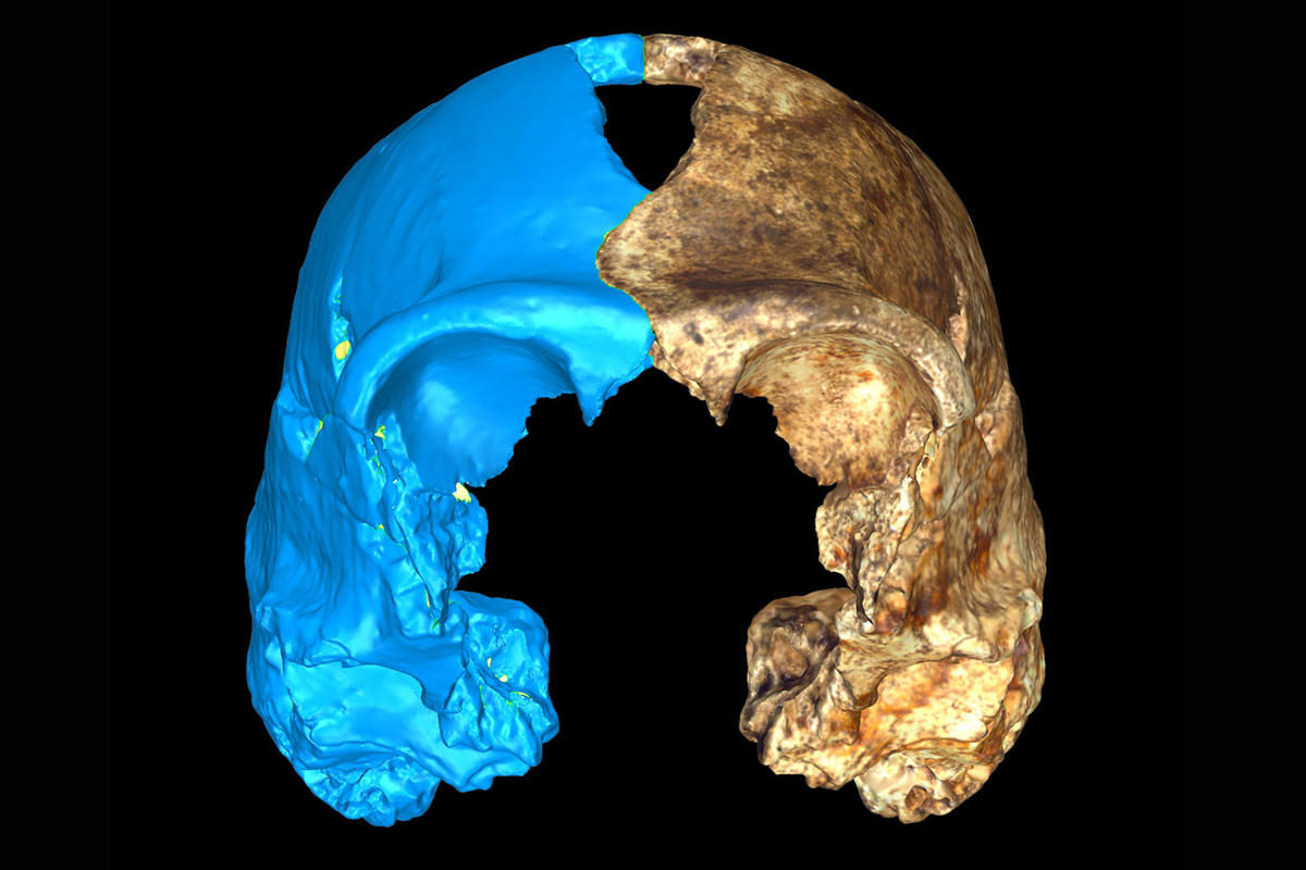 Face view of Homo naledi skull with virtual reconstruction in blue.